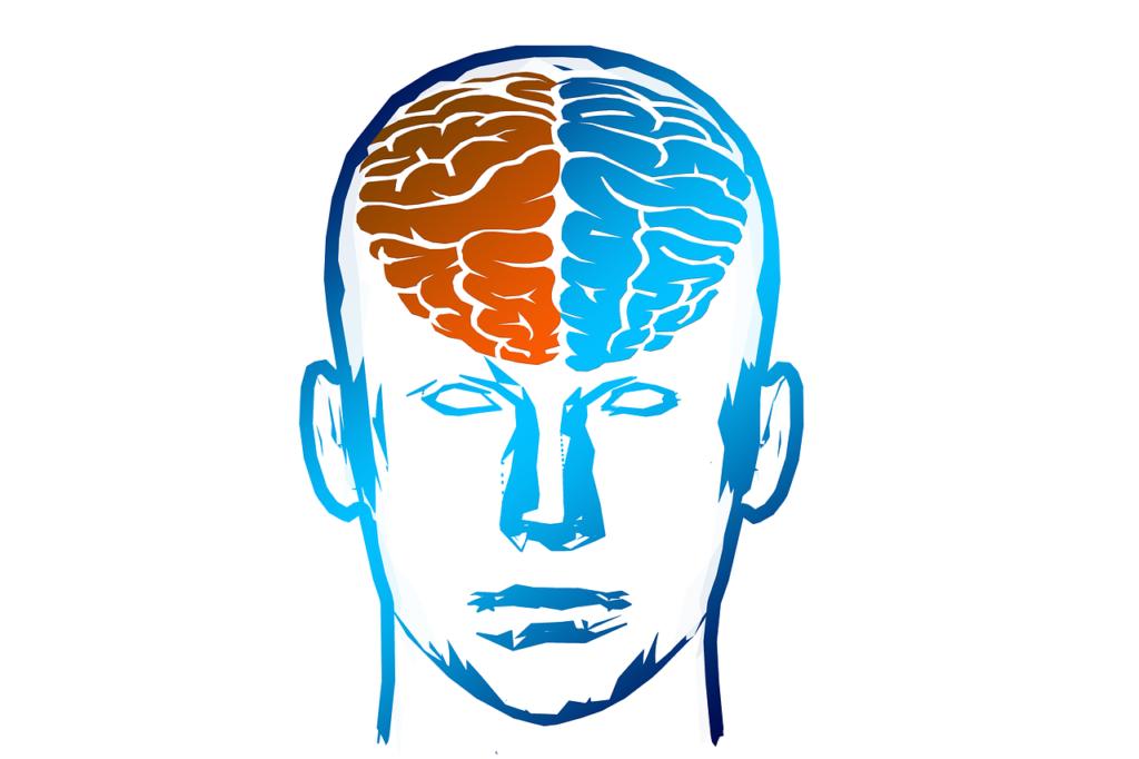 Gehirnhäften